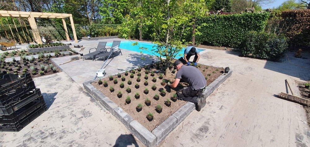 Tuinrenovatie beplanting Tilburg