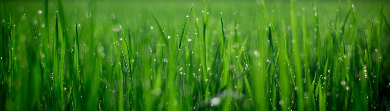 Graszoden Rosmalen