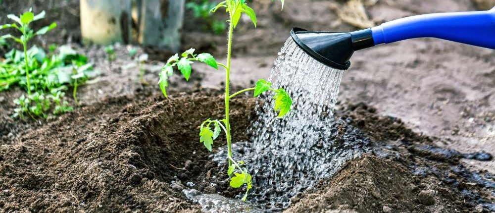 9 tips tegen droogte in de tuin
