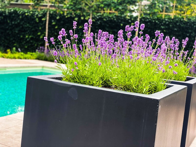 adezz plantenbak prachtig bij tuinaanleg